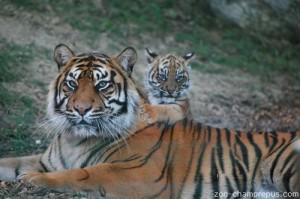 Zoo Champrepus