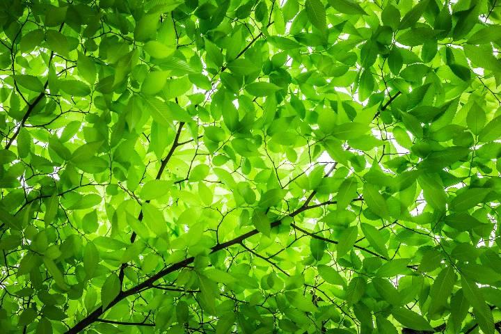 Harcourt : Arboretum