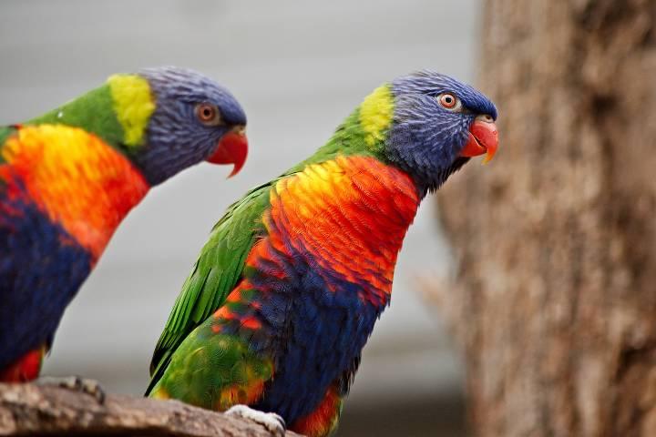Serre zoologique Biotropica