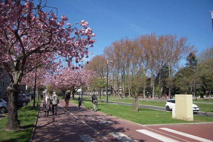 Le Havre : Avenue Foch
