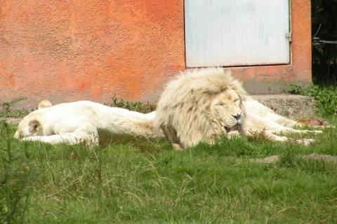 Zoo Normandie