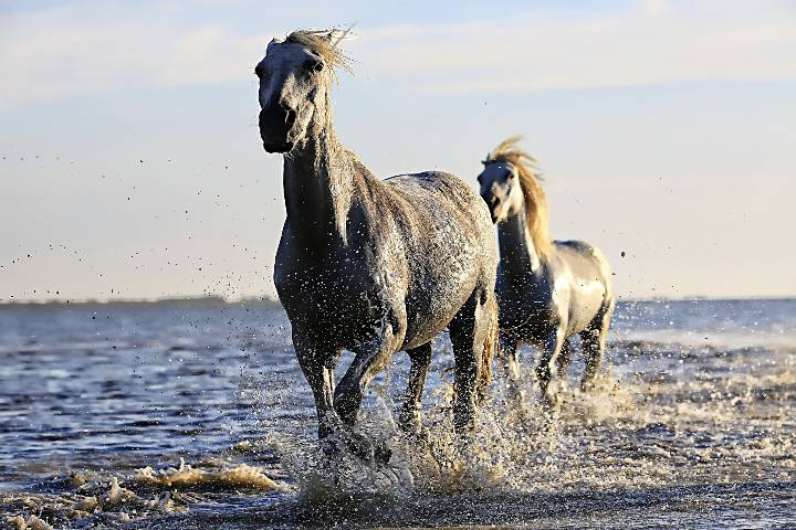 Equitation : Chevaux