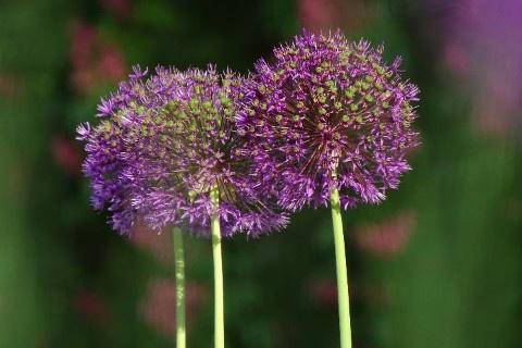 Jardin floral Orne